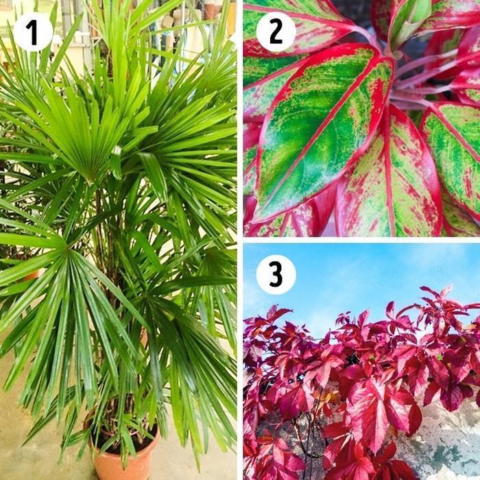 A planta adequada para cada ambiente da casa (5)