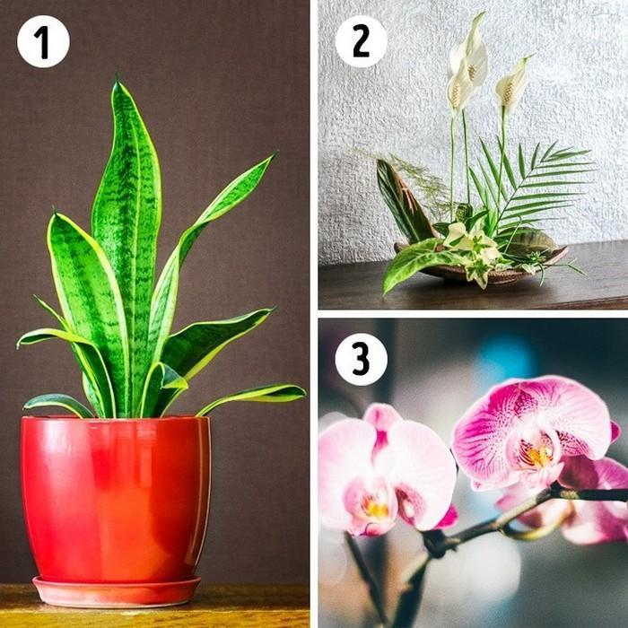 A planta adequada para cada ambiente da casa (4)