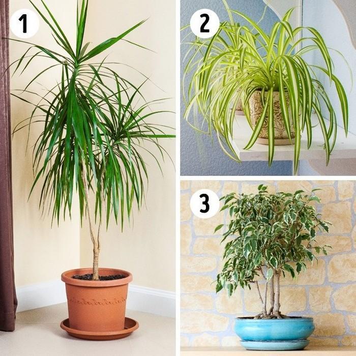 A planta adequada para cada ambiente da casa (2)