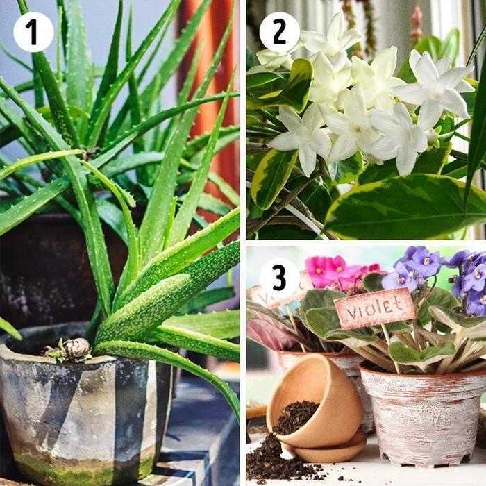 A planta adequada para cada ambiente da casa (1)