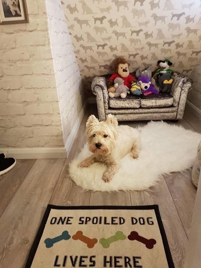 Casinha de cachorro construída embaixo das escadas (4)