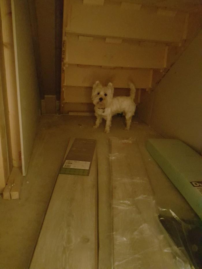 Casinha de cachorro construída embaixo das escadas (9)