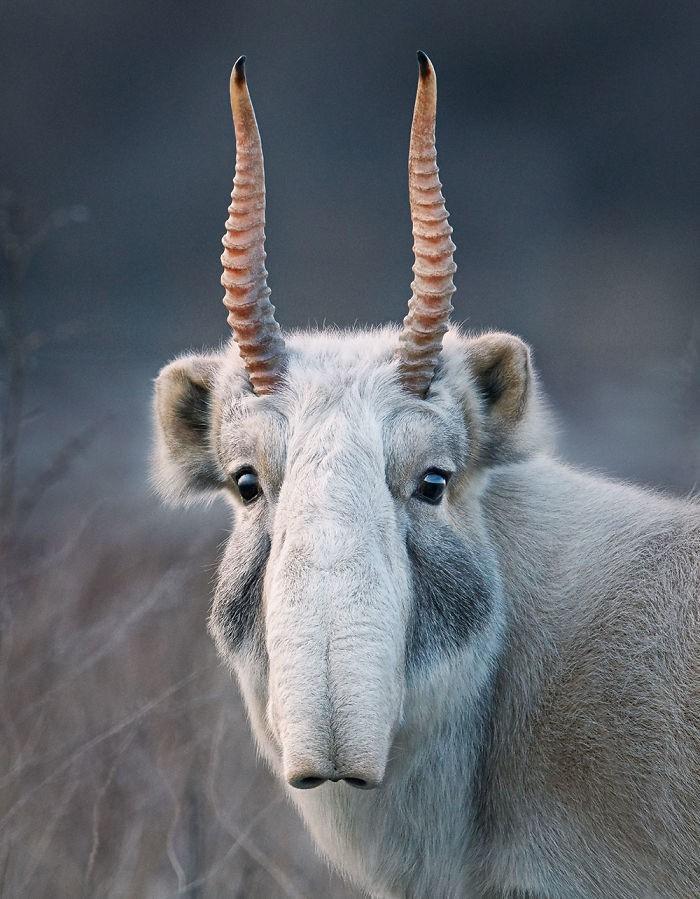Fotógrafo cria, em dois anos, série com animais em extinção (20)