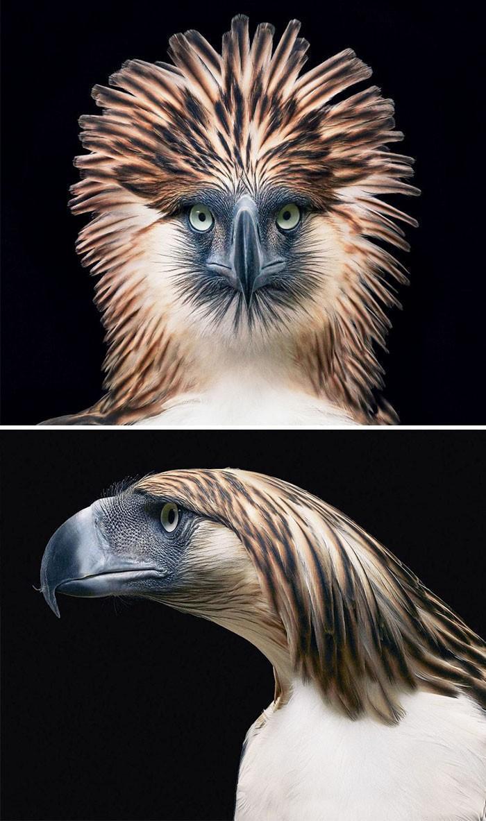 Fotógrafo cria, em dois anos, série com animais em extinção (18)