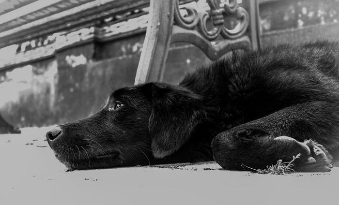 Rússia pretende matar cães abandonados (2)