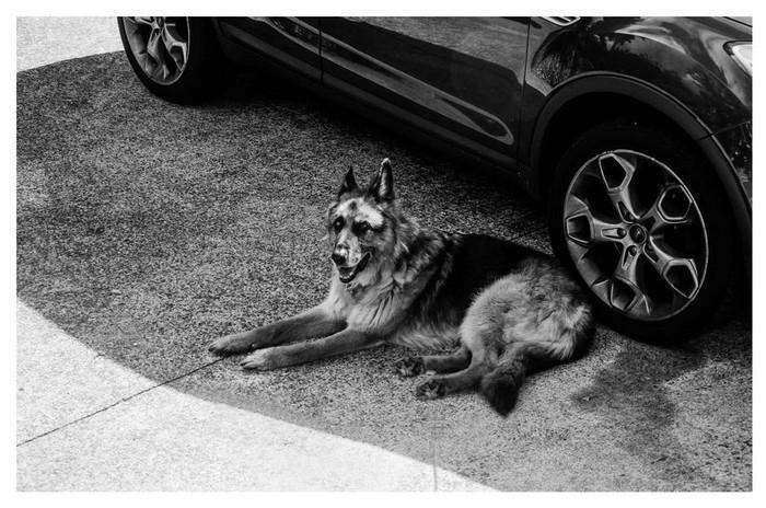 Rússia pretende matar cães abandonados (1)