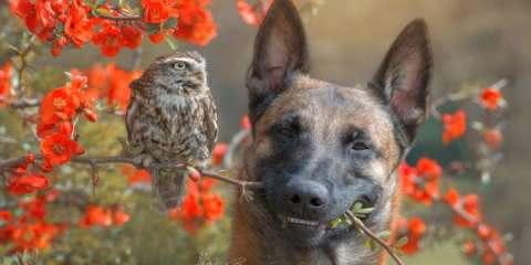 A amizade entre esse cachorro e corujas é tudo o que você precisa ver hoje
