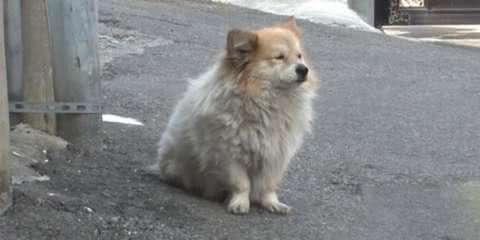 Este cãozinho espera há 3 anos o retorno de sua dona que foi internada