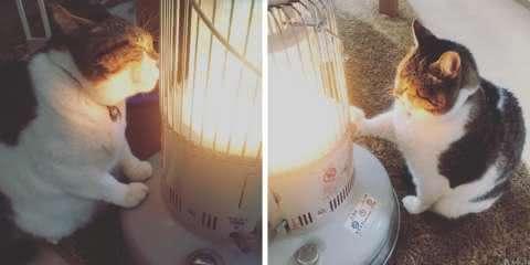 Gato se apaixona por aquecedor e protagoniza fotos hilárias
