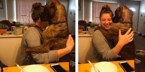 Cachorro adotado demonstra amor pela dona com abraços diários