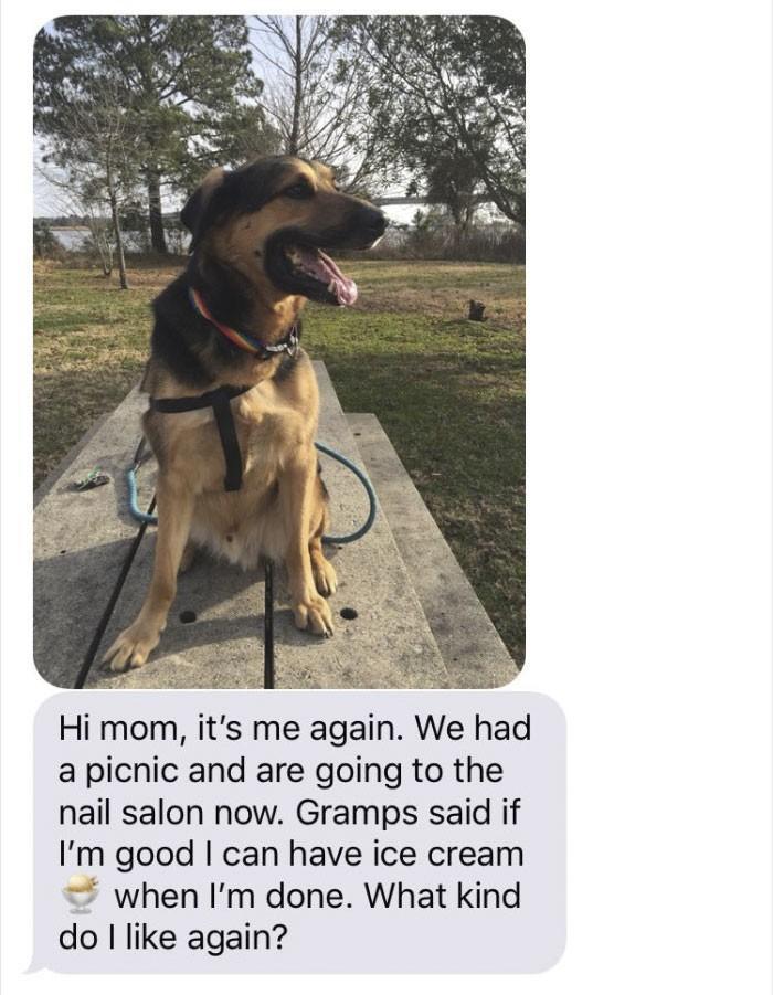 pai fica de babá de cachorro e manda as melhores mensagens para filha (3)
