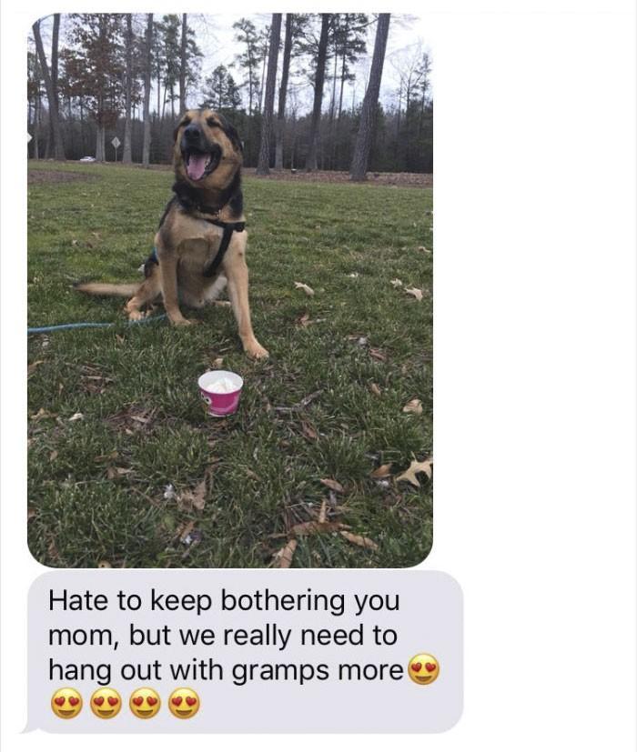 pai fica de babá de cachorro e manda as melhores mensagens para filha (2)