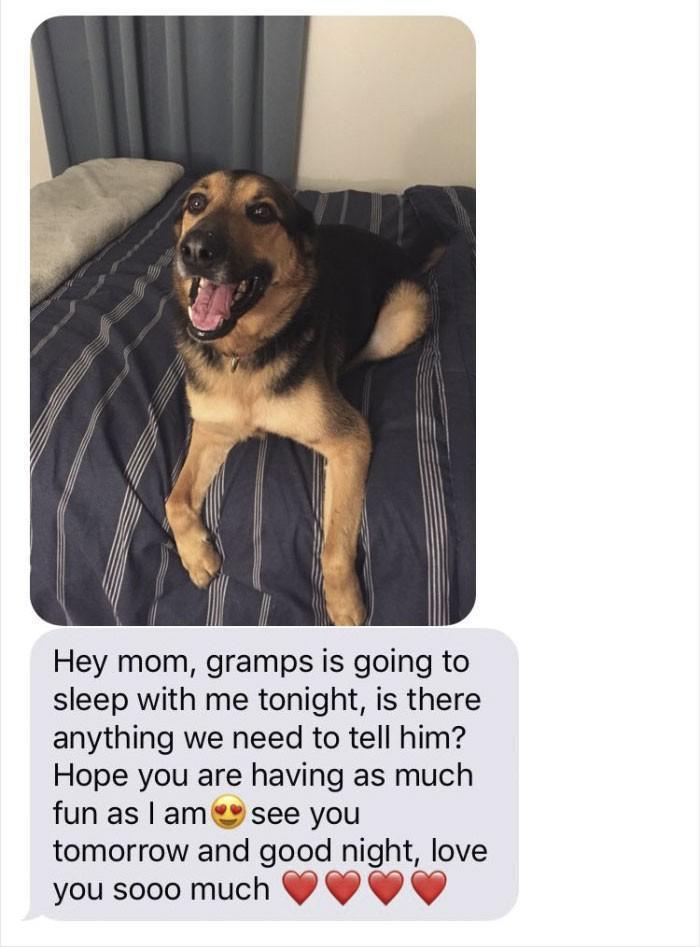 pai fica de babá de cachorro e manda as melhores mensagens para filha (1)