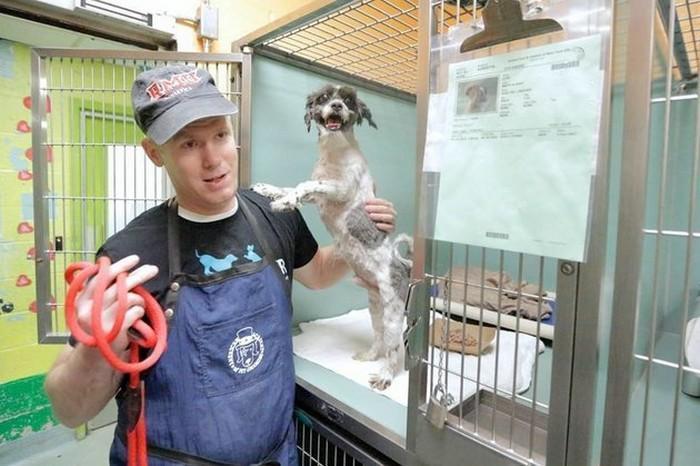 Homem tosa animais de abrigo de graça (10)