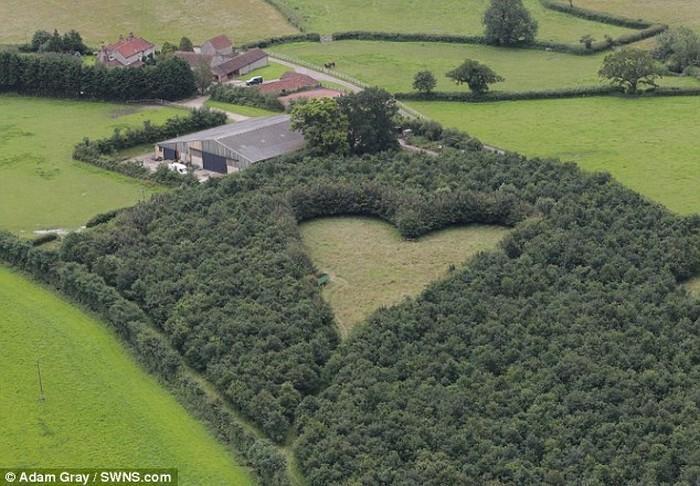 Fazendeiro planta milhares de árvores em tributo à esposa (2)