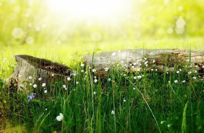 Ciência da cura pela natureza