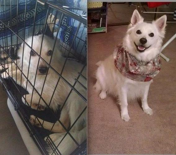 adoção de cachorros