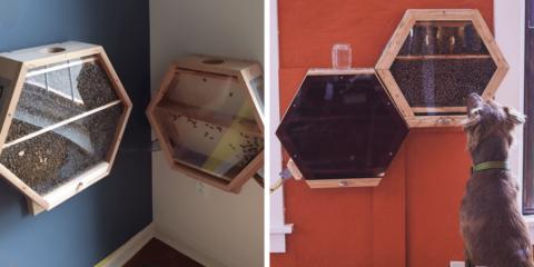 Empresa instala colmeia de abelhas em casas para salvá-las da extinção
