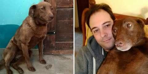 Depois de anos longe, cão reencontra seu dono e derrete o coração de todos
