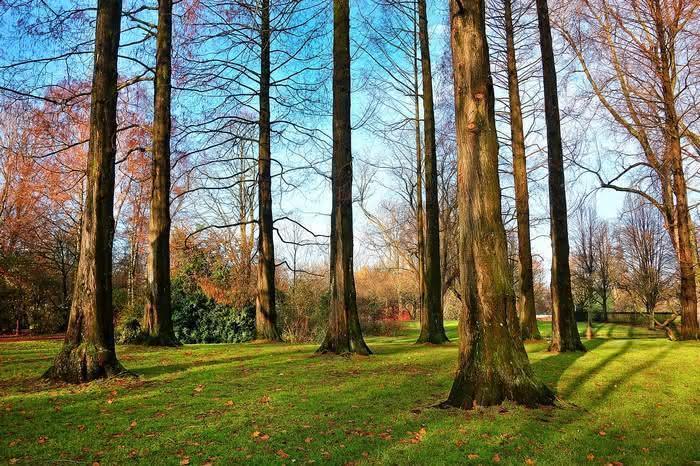Língua das árvores