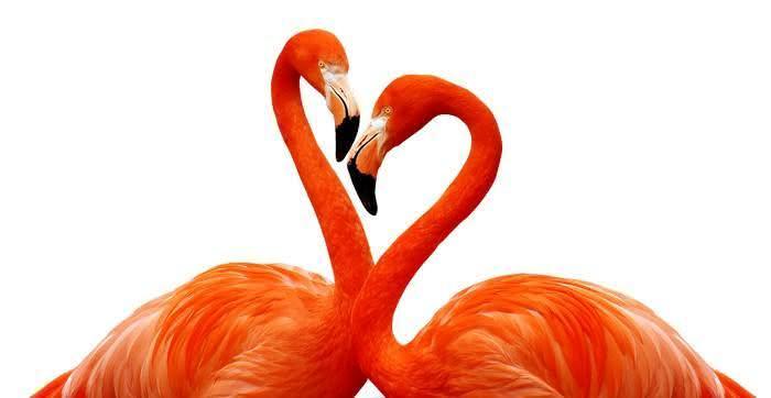 10 verdades sobre pessoas apaixonadas