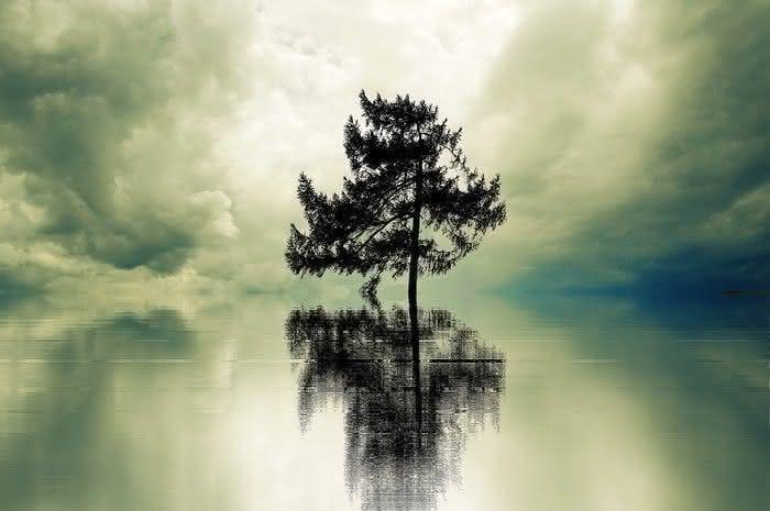 Sabedoria das árvores