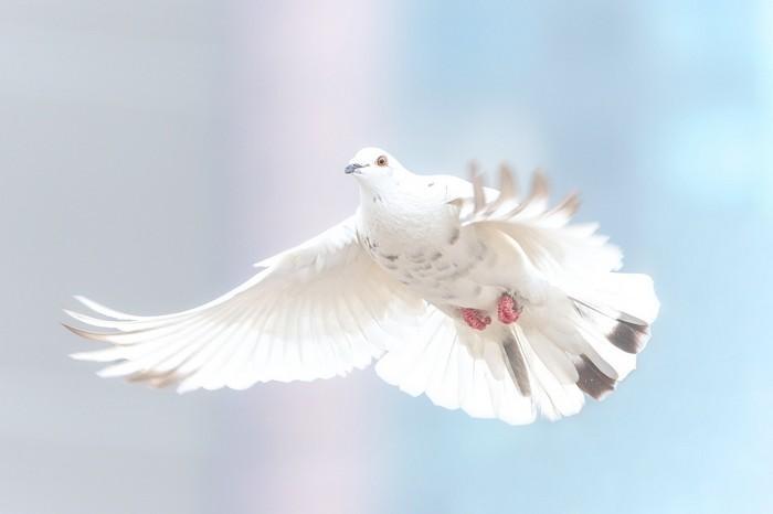 Como trazer paz a sua vida