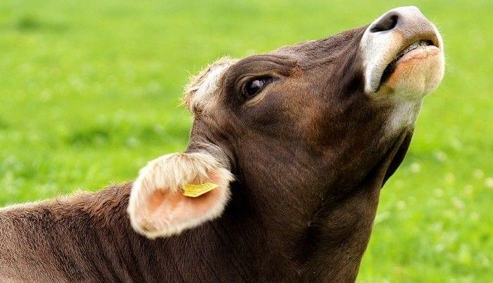 Evitar carnes e laticínios é o melhor para reduzir seu impacto na Terra