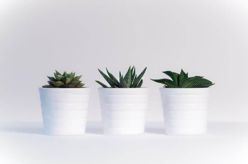 plantas domesticas