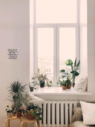 plantas limpam o ar da casa