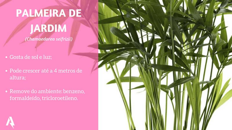 plantas que purificam ar (Palmeira de Jardim)