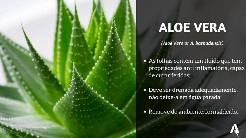 plantas que purificam ar (Aloe Vera)